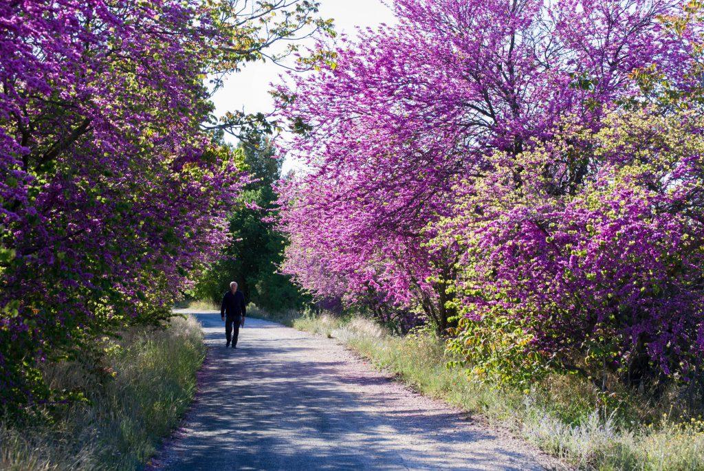 M4 ©Gregorio Egea Jimenez – Murcia Greenway - SPAIN